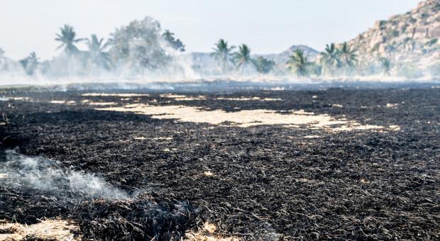 ARiMR za uporczywe wypalanie traw rolnik może stracić dopłaty
