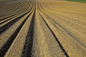 Resort środowiska w sprawie wapnowania gleb
