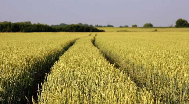 FAO: Mniejsza prognoza światowej produkcji zbóż w sezonie 2018/2019