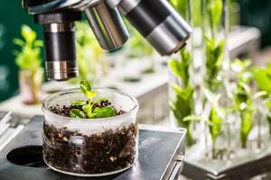 Naukowcy badają wykorzystanie zimnej plazmy. Celem walka z chorobami roślin