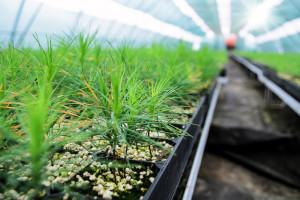Na Podkarpaciu blisko 11 mln sadzonek trafi do lasów
