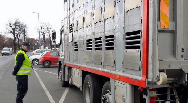 Byków w tirze było za dużo, transport zatrzymany