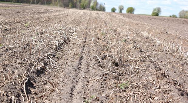 Stosowanie glifosatu na polach z mulczem