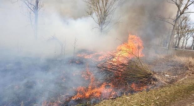 Druh podpalał lasy pod Sochaczewem