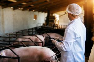 NIK: Niebezpieczne środki w leczeniu zwierząt są poza kontrolą