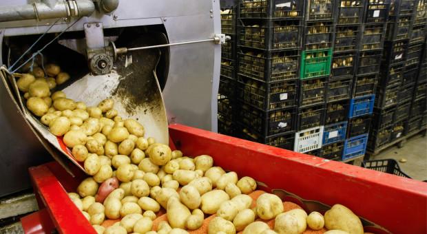 UE: Niemcy liderem w produkcji ziemniaków