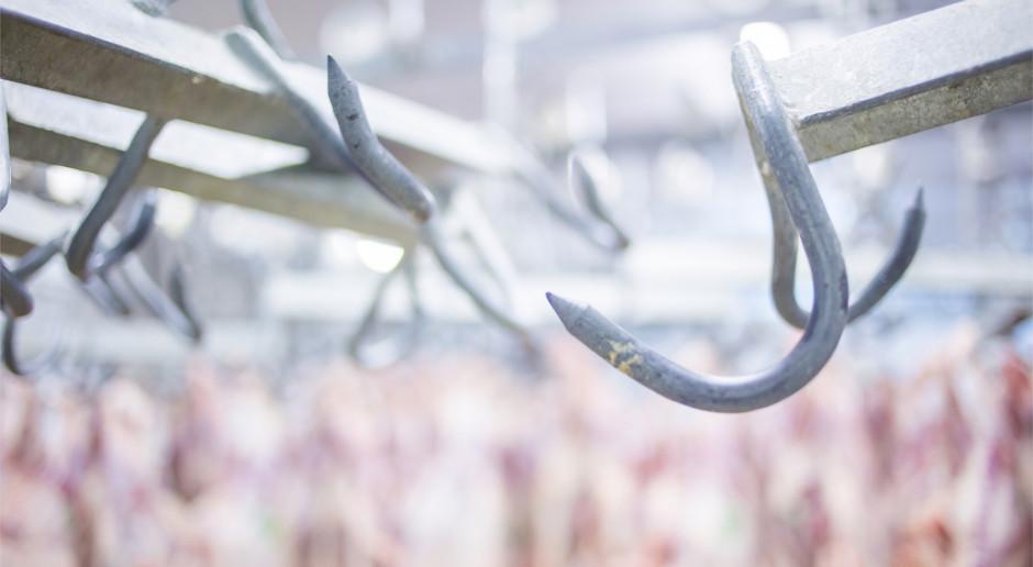 Niemcy: plan surowszych przepisów dla zakładów ubojowych