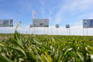 Wiosenna ochrona fungicydowa zbóż z BASF