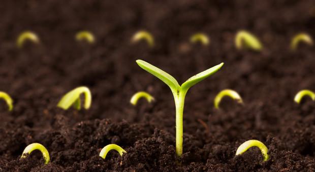 Biostymulatory – idealne wsparcie roślin po zimie