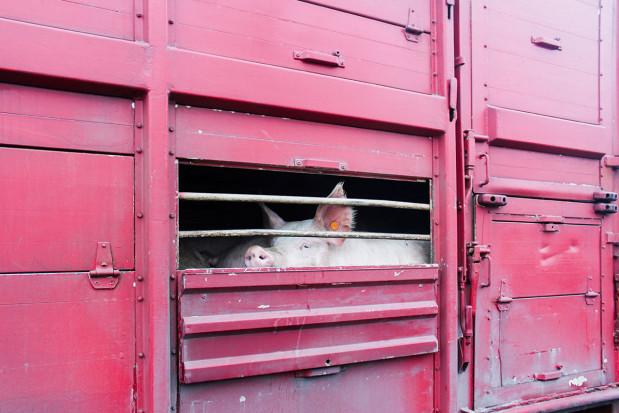 Patologie w pakiecie… ze świadectwami zdrowia zwierząt