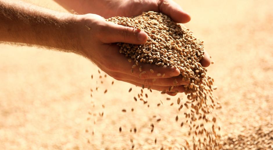 Słabe perspektywy notowań zbóż na światowych rynkach