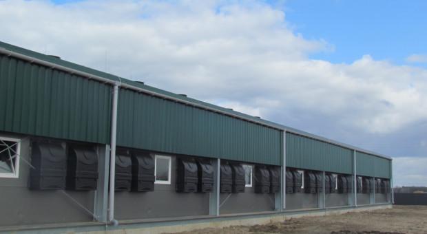 Na Kujawach otwarto kolejną dużą fermę loch