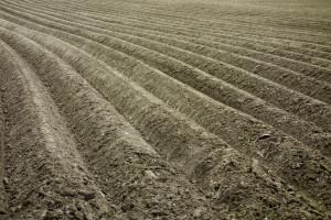 Rosja: Wzrost areału upraw