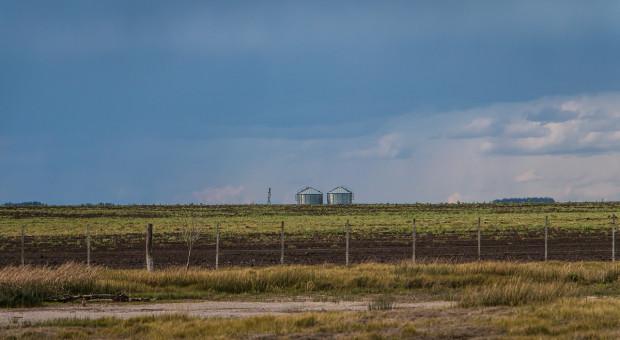Giełdy krajowe: Ceny zbóż nadal spadają