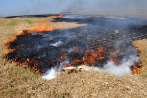 """Strażacy i MSWiA zainicjowali kampanię """"STOP pożarom traw"""""""