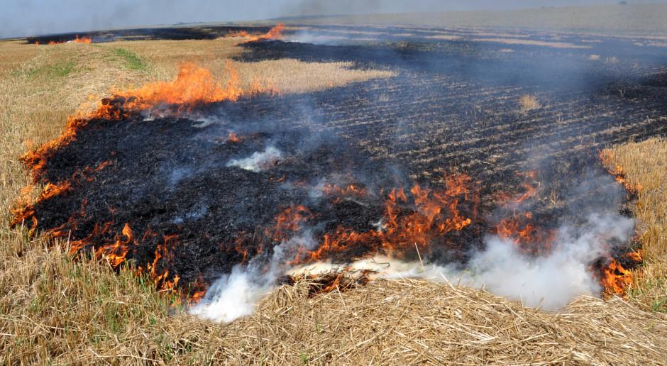 Strażacy: Przez weekend ponad 1,5 tysiąca pożarów traw