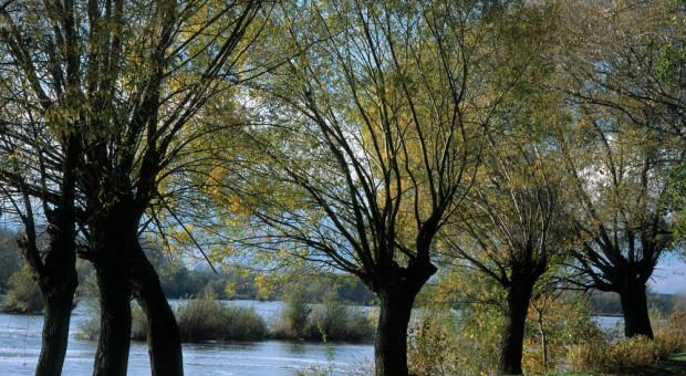 650 tys. młodych pstrągów potokowych trafi do dolnośląskich rzek