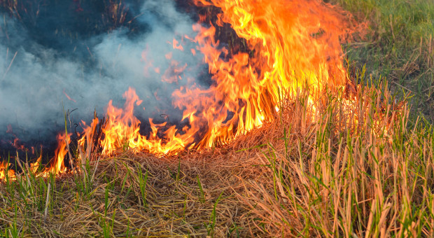 W Krakowie spłonęło kilkadziesiąt hektarów traw