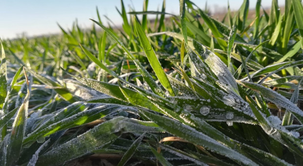 Ochłodzenie i przymrozki wstrzymały ruch na polach