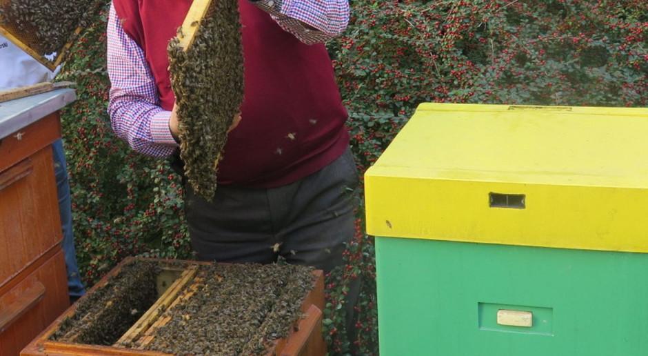 Pomagamy pszczołom bez lipy – kampania edukacyjna