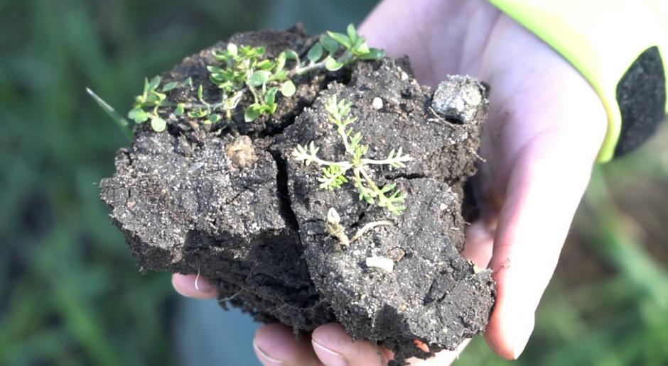 Decydując się na odchwaszczanie zbóż, zwracaj uwagę na minimalną temperaturę działania herbicydu