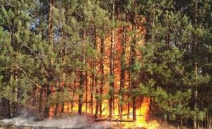 Ogień z nieużytków przeniósł się szybko na młody las