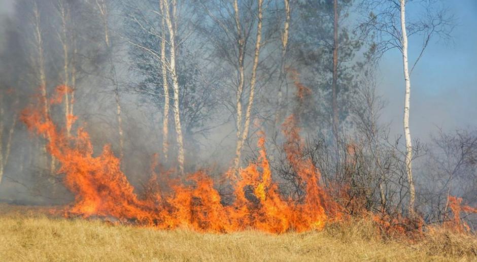W pożarze traw zginął starszy mężczyzna