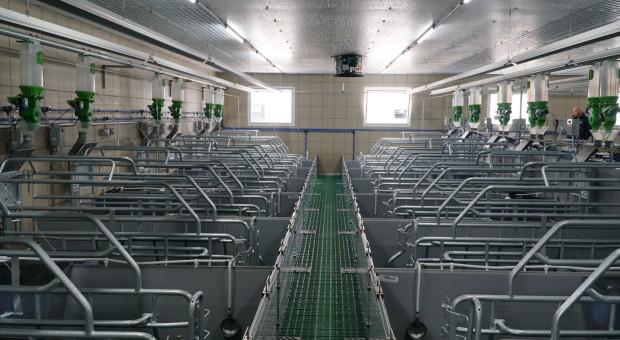 Innowacje i bioasekuracja, to wizytówka nowej fermy świń w Śląskowie