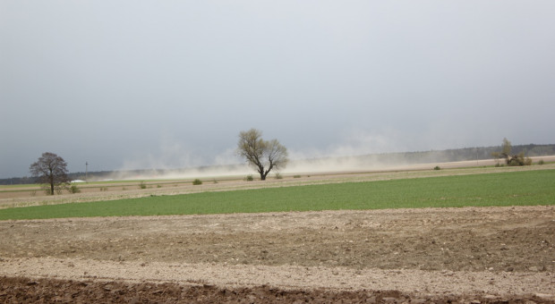 Sucho na polach, wiatry potęgują erozję wietrzną