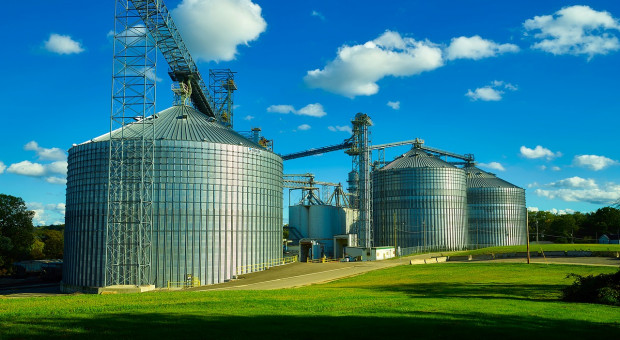 FAO: Światowe rynki zbóż pozostają dobrze zrównoważone