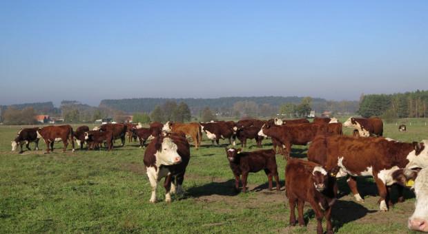 Te kraje znoszą restrykcje importowe dla polskiej wołowiny