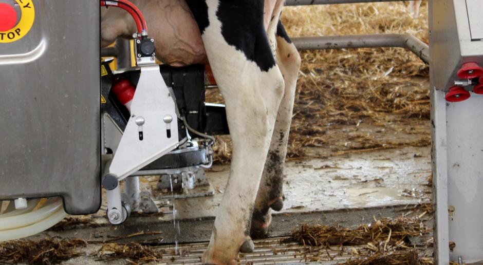 Wzrosty cen mleka mogą utrzymać się do połowy 2019 r.