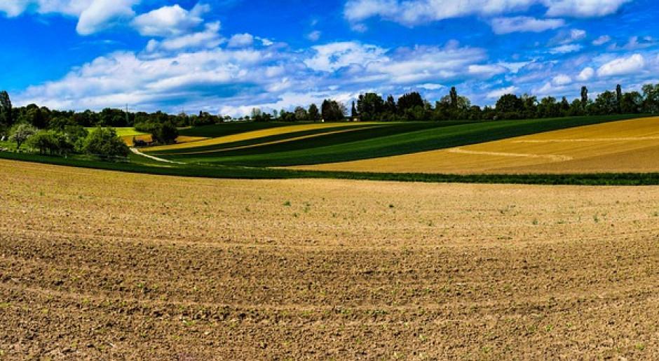 Uprawa współrzędna - większe zyski z rolnictwa i korzyści dla środowiska