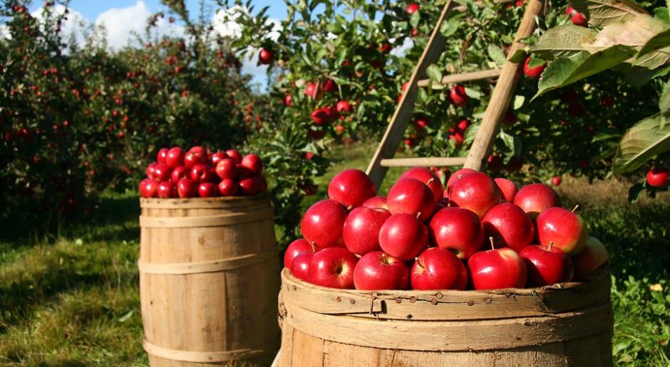 Skrzynie pełne jabłek dla pacjentów katowickiego szpitala urologicznego
