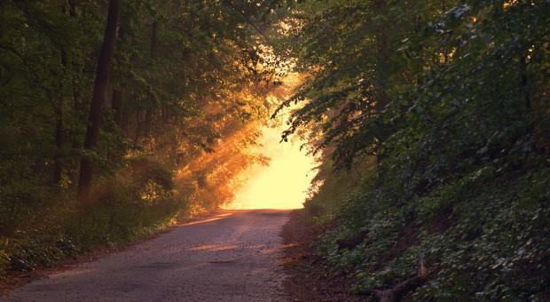 Nowe dotacje z PROW na przebudowę lasu – nawet 14 213 zł na ha