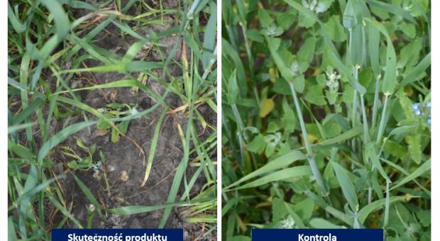 Zwalczanie chwastów w zbożach herbicydami od CIECH Sarzyna