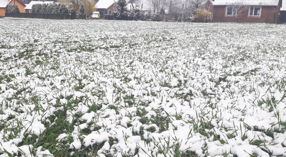 Zima w kwietniu – czy uprawy są zagrożone?