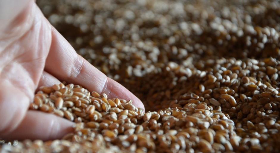 Zerowa stawka celna na import zbóż do Turcji