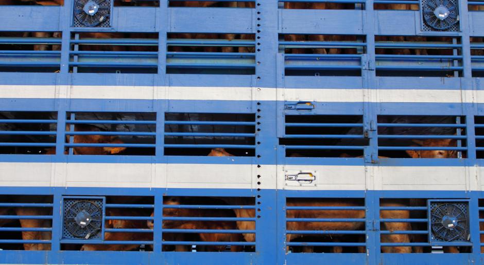 KE opublikowała raport po audycie w Polsce: kontrole uboju nieskuteczne