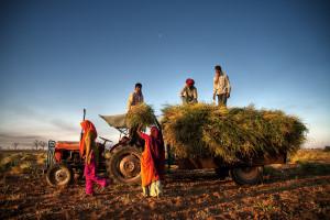 Indie: Czy rolnicy mają głos w wyborach? - reportaż