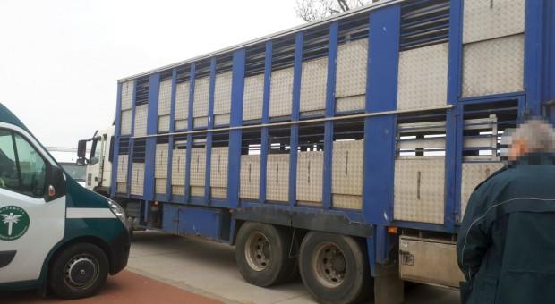 Tuczników za dużo, ciężarówka niesprawna