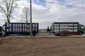 Inspekcja transportu wspólnie z lekarzami powiatowymi kontroluje transporty zwierząt na Podlasiu