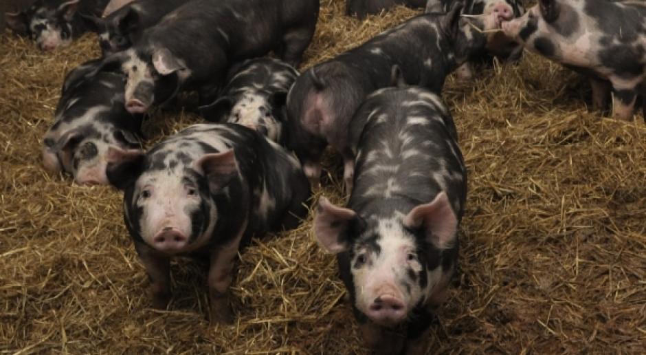 """SRW RP wspiera wyjątkowe produkty, w tym wieprzowinę """"bez GMO"""""""