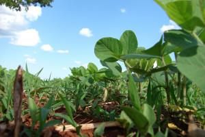 Rosja w tym roku może wyeksportować mniej soi