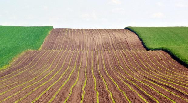 Aktualny stan zasiewów i zasilania roślin ozimych w Rosji