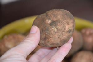 Ziemniaki mocno tanieją. Ale tylko w skupie