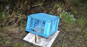 Hodowca gołębi uśmiercił kota sąsiadki
