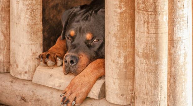 Zwierzę zabrane bezpodstawnie – ale niezwrócone właścicielowi