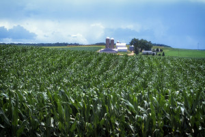 USDA: Zwalniają zmiany strukturalne w amerykańskim rolnictwie