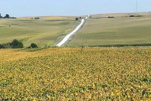 Rolnictwo potrzebuje zmian – szybciej musi stawiać na innowacyjność